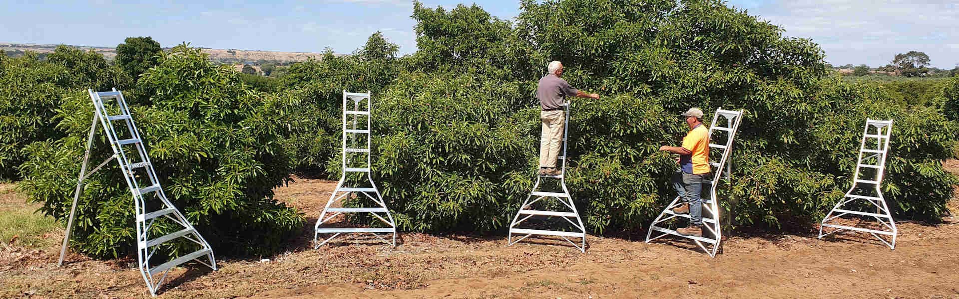 Tripod ladders with pickers