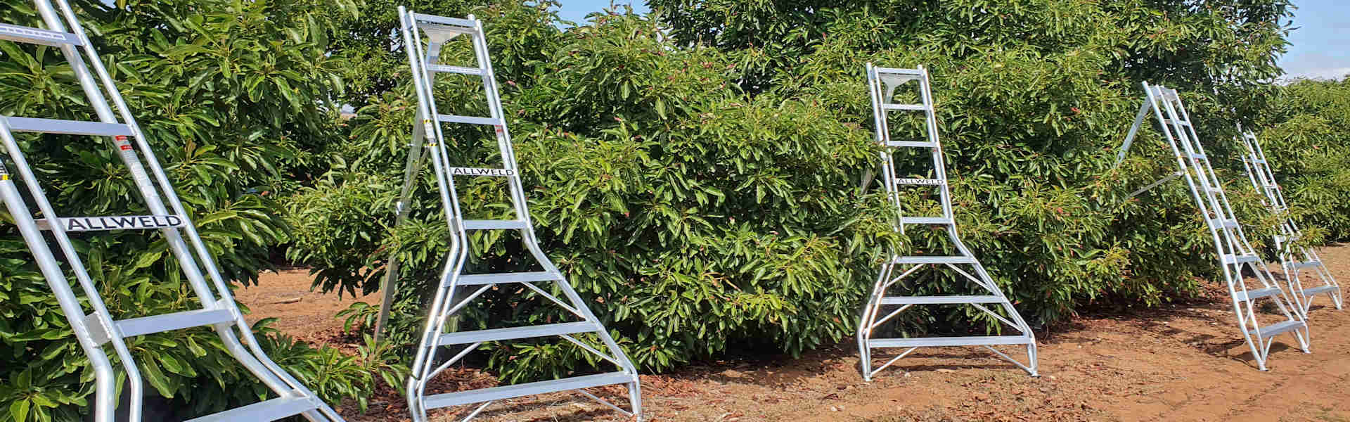 Allweld Orchard Ladders
